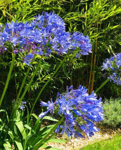 paysagiste angers saumur creation jardin