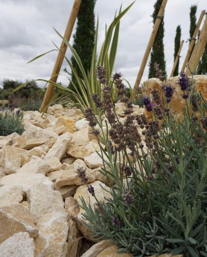 Créer un jardin méditerranéen avec un paysagiste